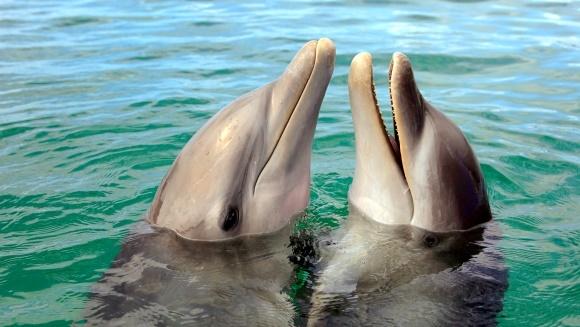 A fost înregistrată prima conversaţie dintre doi delfini