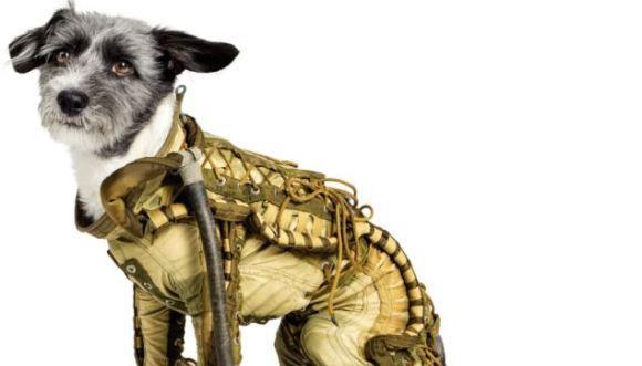 Cât costă un costum spaţial pentru câini