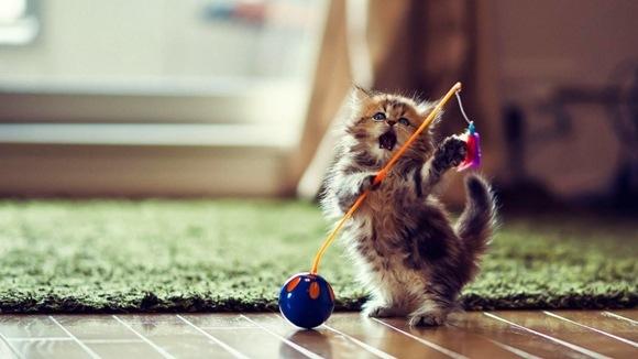Creativitate la cote maxime - Cele mai cool jucării pentru pisici