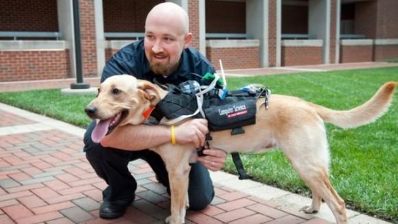 Dispozitiv care facilitează comunicarea câinilor cu oamenii
