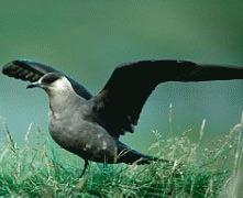 Incalzirea globala va omori una din zece specii de pasari din Anglia