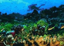 Hawaii amendeaza aspru turistii care ii distrug coralii