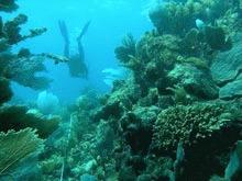 Inghetarea, salvarea coralilor