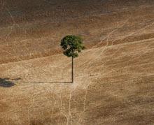 Cauza biodiversitatii este mai urgenta decat cea a schimbarilor climatice