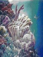 Recifurile de corali sunt in pericol