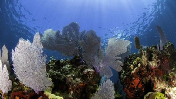 Record insolit: doi profesori americani au petrecut 73 de zile sub apă (VIDEO)