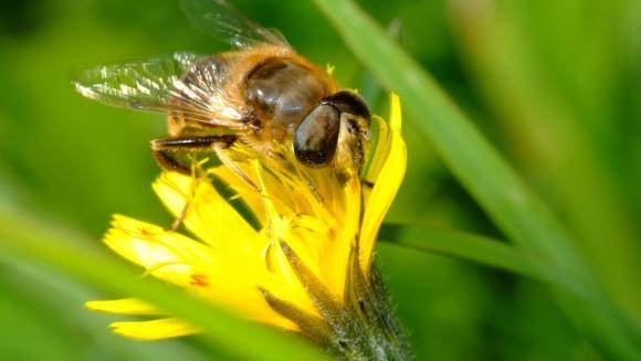 Albinele, în pericol de dispariţie. Cum vor fi afectați oamenii