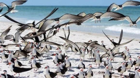 Aproape toate păsările marine vor ingurgita plastic până în 2050