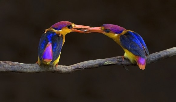 Cele mai frumoase fotografii de natură din 2015. Îți vor tăia răsuflarea - Galerie Foto
