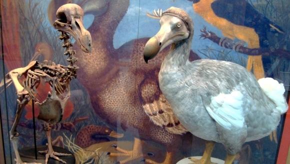 6 tipuri de extincţii ale animalelor, despre care nu ştiam că există