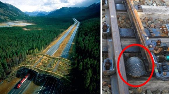 Poduri şi trecători pentru animale. Invenţii uimitoare care salvează mii de vieţi anual -Galerie foto
