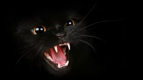 Ghinionul adus de pisicile negre – între mit şi realitate