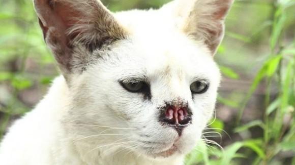 Cea mai rară pisică din lume a învins cancerul