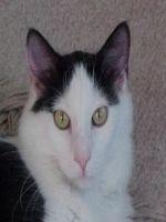 Sardine cu orez pentru pisicute