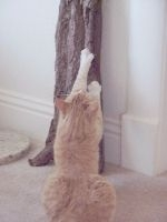 Pisica in apartament - probleme de comportament