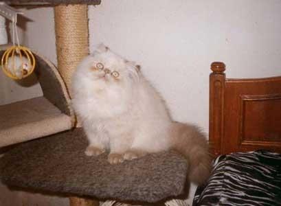 Primul ajutor in cazurile de epilepsie la pisica