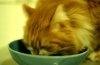 Pisicile si manierele la masa