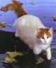 Pisica inotatoare