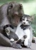 Pisicile sociale