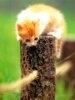 Pisicile aterizeaza intotdeauna in picioare - mit sau realitate?