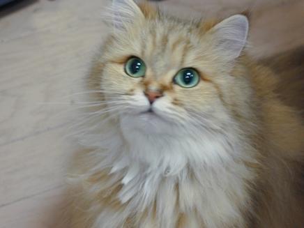 Pisica, antidot pentru crize existentiale