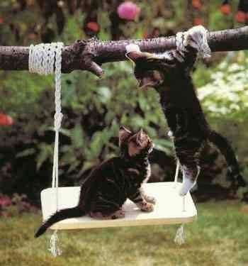 Primul ajutor in cazul unei insolatii la pisica