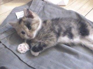 Cum procedati in cazul in care pisica dumneavoastra este zgariata?