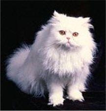 Cum verificam respiratia unei pisici