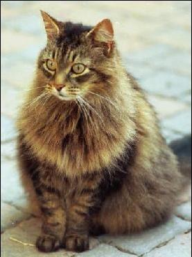 Puteti sa va invatati pisica sa stea in sezut in 10 minute!