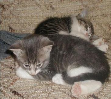Cand pisica exploreaza casa<br>