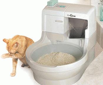Cum alegem litiera pentru pisica?