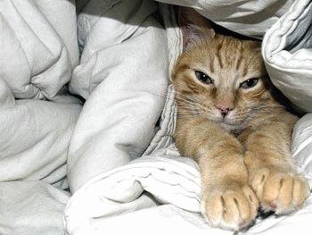 Torsul - arma secreta a pisicilor!