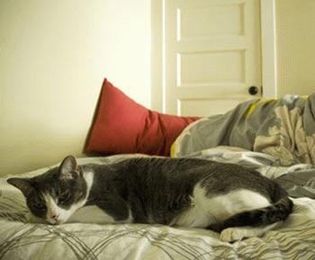 Pisica urineaza in pat - ce e de facut?!