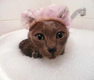 Pisica face baie!