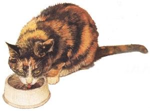 Pisica : adevar si fals despre legendele alimentatiei