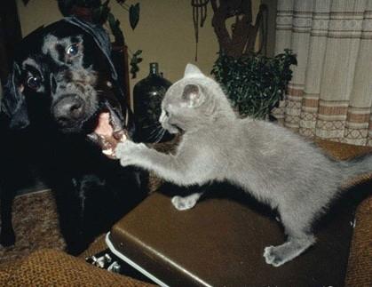 $45.000 despagubire pentru o pisica!