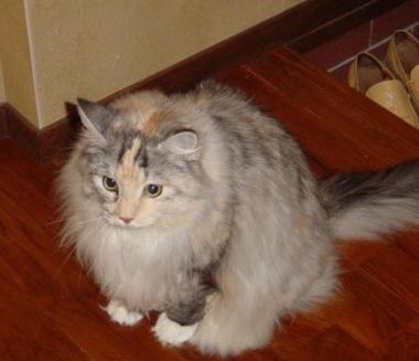 O pisica captiva