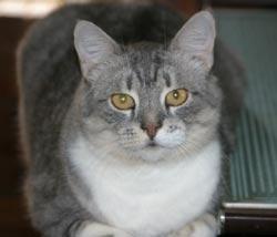 Blana la caine si pisica : sanatate si intretinere