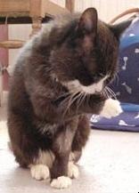 Pisica : curatenia puiului si a animalului matur
