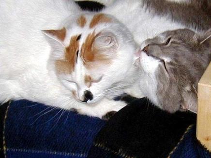 Abstinenta la pisici