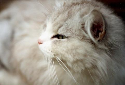 Sfaturi pentru cei care doresc sa aiba pisici.