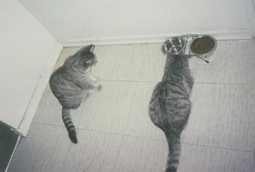 Ritmul circadian al pisicii