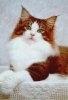 Topul celor mai comune greseli facute de noii proprietari de pisici