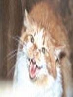 Infectiile provocate de rani la pisici