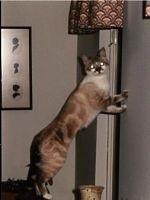 Accesorii pentru pisici aristocrate