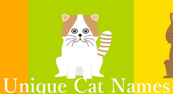 Top 10 cele mai cool nume de pisici ale anului 2016