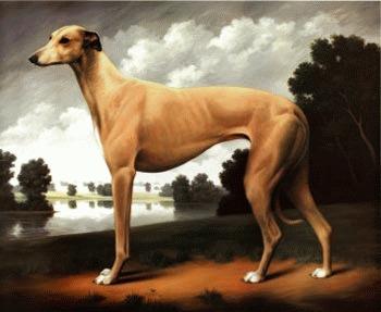 Greyhoundul sau Ogarul englez