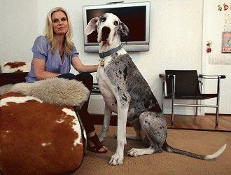 10 cele mai potrivite rase de caini pentru apartament