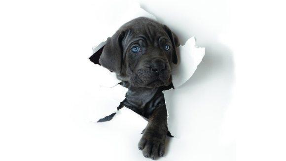 Sindromul câinelui negru