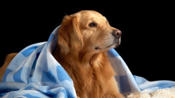 Cele mai potrivite rase de câini pentru persoanele cu dizabilități
